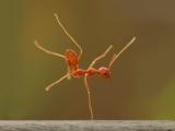螞蟻也跳舞