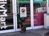 本店禁止貓進入