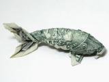 金錢魚! 你要吃嗎?