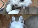 一秒鍾變兔子