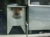 隔壁早餐店養的看門狗,真是可愛死了