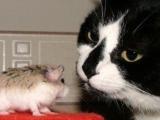 老鼠愛大米,盯盯盯盯盯盯