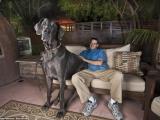 世界最巨大型既狗,大過人