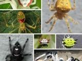 無奇不有!大自然八種最神奇的微笑蜘蛛