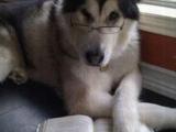 連狗都在讀書了你們還在幹什麼啊??