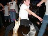 貓貓也會跳舞了有圖為證