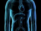 肝臟大解構之肝臟發酵