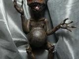 超詭異的少女玩偶-買一個吧!