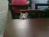 喂!老板,我點的菜什麼時候上來!不要看我個子小,就可以直接無視我。