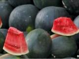 西瓜爆炸源自「瓜農偷用膨大劑」