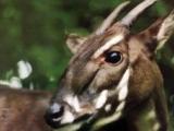 最新研究指物種滅絕沒有那麼快