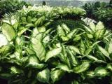 替觀葉植物選擇肥料的三大考量