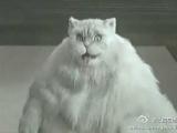 這貓成精了