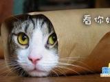 可愛小貓之看你妹啊