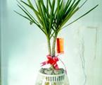 能驅除新房污染的植物