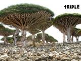 地球上最像外星的地方 索科特拉島(Socotra)