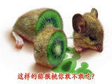 如果有一天有一個這樣的獼猴桃擺在你面前,你敢不敢吃?