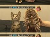 小貓和外星動物親密接觸