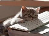 打字時睡著了。。。