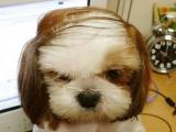 小狗禿頭了!