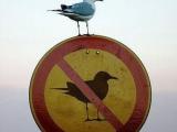 公然挑戰公權力!好鳥~好鳥~