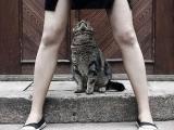 好色的貓咪