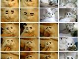 有眉毛的貓真可愛
