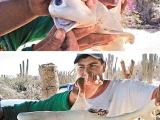 漁民剖鯊腹取畸胎獨眼鯊魚夠嚇人