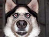 狗狗  你兇到我了.........