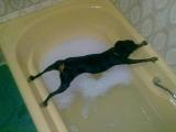我的狗堅決不洗澡