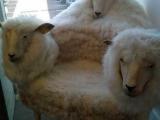 喜羊羊的寶座...