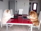 狗狗也在上臉書