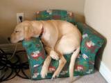 狗狗的椅子