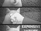 貴族貓的物種起源......