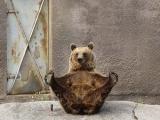 熊熊歷險記