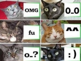 貓的表情XDDDD
