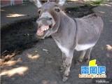 動物抓拍笑死你