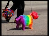 七色彩虹狗