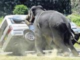 大笨象才不笨啊!