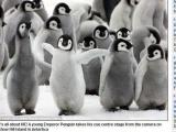 企鵝寶寶雪地跳舞