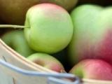 健康研究:食用大量蘋果可預防中風