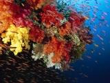 太平洋最美的海底生物