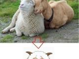 終於找到喜羊羊的父母了
