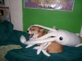 救命啊!水母突襲我