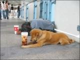 好可憐!乞丐跟狗狗同一命運
