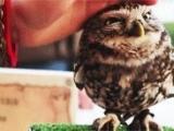 超可愛的貓頭鷹