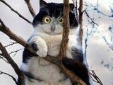 我真的不是貓. . . . . . . . . 貓. . . . . . 頭鷹!!