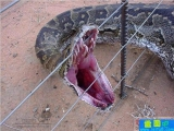 原來蛇有這麼多牙!