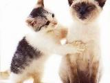 原來...貓界也有