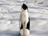 又在裝企鵝了...